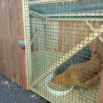 鶏のいる暮らし-鶏小屋Niwani2wa-